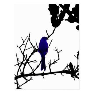 Blauer Vogel auf schwarzem Baum Postkarte