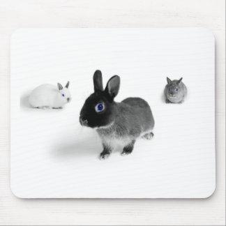 Blaues Augen-Häschen Mousepad