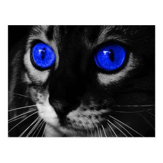 Blaues Augen-Katze Postkarte