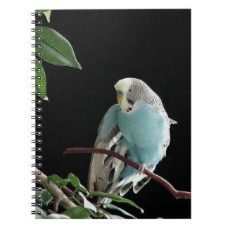 Blaues Budgie Notizbuch, Parakeet-Briefpapier Spiral Notizblock