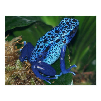 Blaues Gift-Pfeil-Frosch-Porträt Postkarte