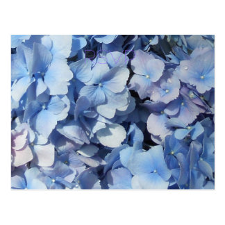 Blaues Hydrangea UAWG Wedding Postkarte