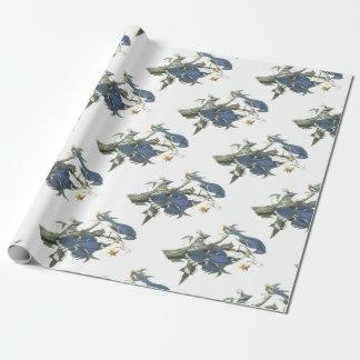 Blaues Jay durch Audubon Geschenkpapier