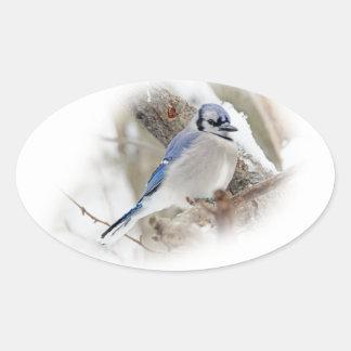 Blaues Jay im Winter-Schnee Ovaler Aufkleber