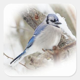 Blaues Jay im Winter-Schnee Quadratischer Aufkleber