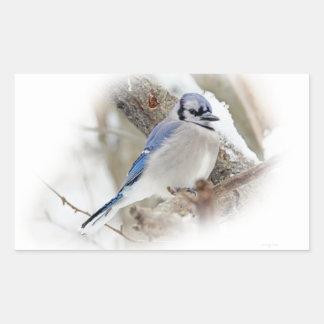 Blaues Jay im Winter-Schnee Rechteckiger Aufkleber