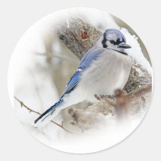 Blaues Jay im Winter-Schnee Runder Aufkleber
