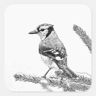 Blaues Jay in der Winter-Skizze Quadratischer Aufkleber