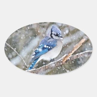 Blaues Jay in einem Schneesturm Ovaler Aufkleber