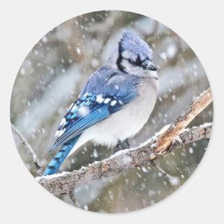 Blaues Jay in einem Schneesturm Runder Aufkleber