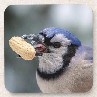 Blaues Jay mit einer Erdnuss Getränkeuntersetzer