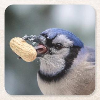 Blaues Jay mit einer Erdnuss Rechteckiger Pappuntersetzer