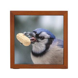 Blaues Jay mit einer Erdnuss Stifthalter