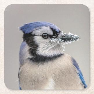 Blaues Jay mit Schnee auf seinem Schnabel Rechteckiger Pappuntersetzer