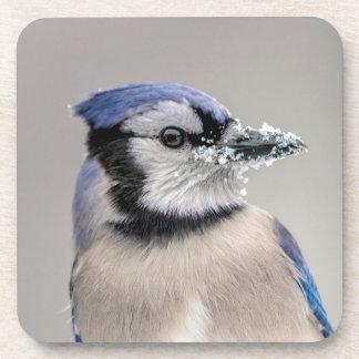 Blaues Jay mit Schnee auf seinem Schnabel Untersetzer