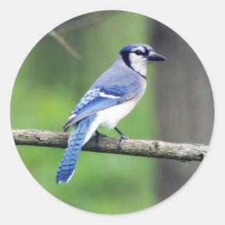 Blaues Jay-runder Aufkleber