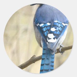 Blaues Jay Runder Aufkleber
