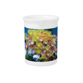 blaues Korallenriff ja Krug
