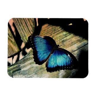 Blaues Morpho Schmetterlings-Insekten-hübscher Magnet