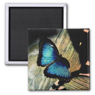 Blaues Morpho Schmetterlings-Insekten-hübscher Quadratischer Magnet