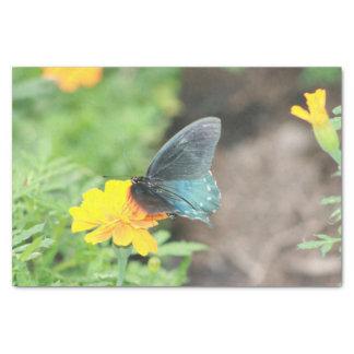 Blaues Schmetterlings-Gelbcoreopsis-Sommer-Gewebe Seidenpapier