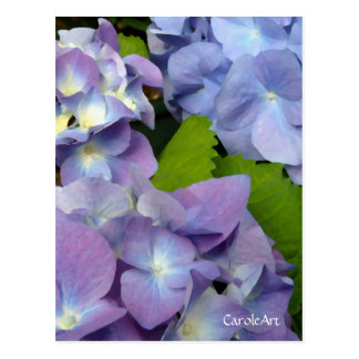 Blaueste blaue Hydrangeas Postkarte
