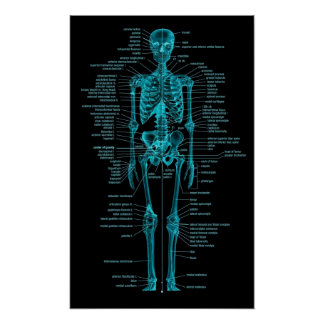 blaugrünes skeleton Plakat