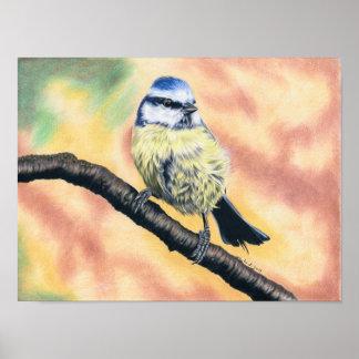 Blaumeise - Farbstiftzeichnung Poster