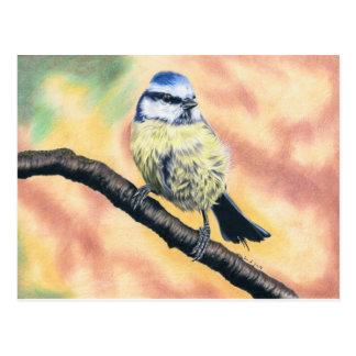 Blaumeise - Farbstiftzeichnung Postkarte