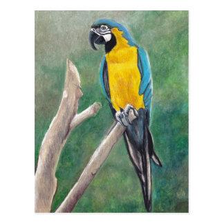 Blauund Goldmacaw-Vogel-Kunst-Postkarte Postkarte