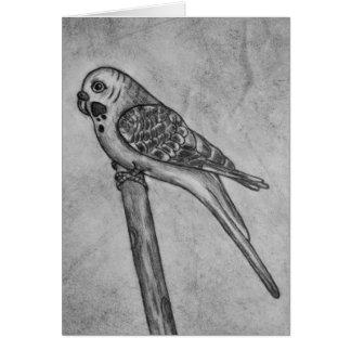 Bleistift-Zeichnen von Parakeet sitzend auf Grußkarte