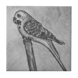 Bleistift-Zeichnen von Parakeet sitzend auf Kleine Quadratische Fliese