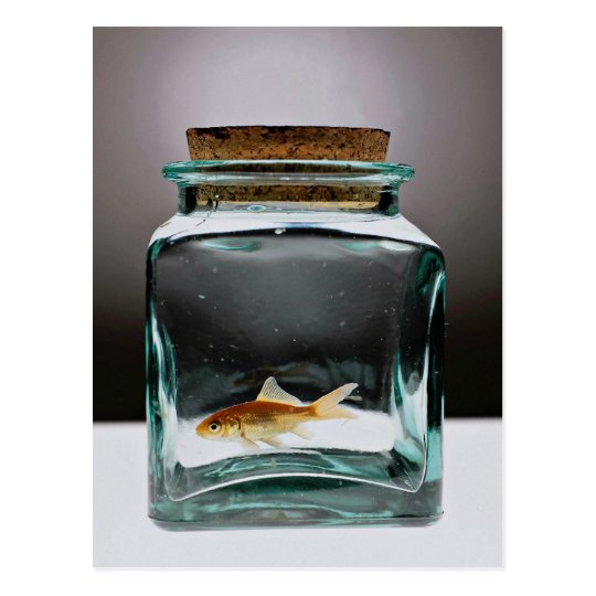 blendungs goldfisch im glas postkarte zazzle. Black Bedroom Furniture Sets. Home Design Ideas