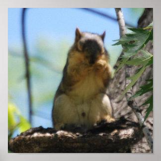 Blitzen-Eichhörnchen Poster