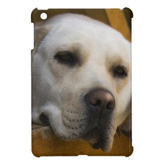 Blonder Labrador-Retriever, Patagonia, Chile Hüllen Für iPad Mini