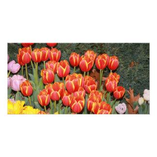 Bloomin Tulpen! Karte