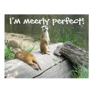 Bloß perfektes Meerkat Postkarte