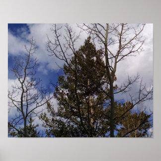 Bloße Espen und Nadelbäume, Reichweite in den Poster