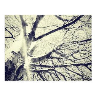 Bloßer Schwarzweiss-Baum Postkarte