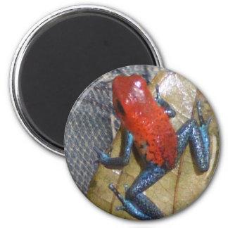 Blue Jeans-Frosch-Magnet Runder Magnet 5,7 Cm