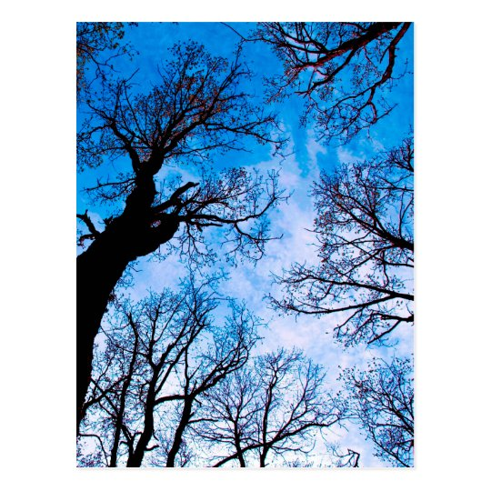 BLUE POWER OF TREE POSTKARTE