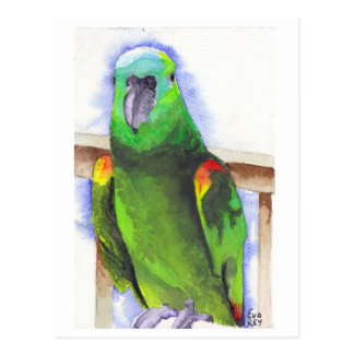 Blue The Parrot Postkarte