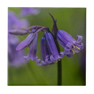Bluebell-Blume Keramikfliese