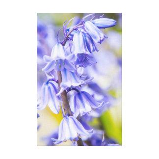 Bluebells Leinwanddruck
