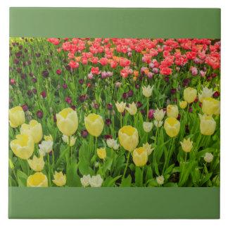 Blühen der Tulpen in einem Park auf Keramikfliese