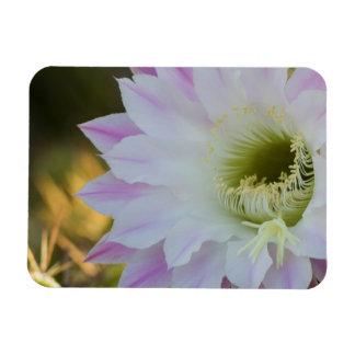 Blühen in Lila und in weißem Magnet