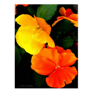 Blühen Postkarte