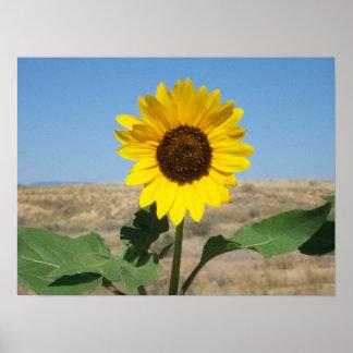 Blühen Sie, wo Sie gepflanzt werden - Grasland-Blu Poster