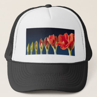 Blühende Amaryllis-Blume Truckerkappe