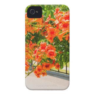 Blühende Blumen der Orange auf fence.JPG iPhone 4 Hülle